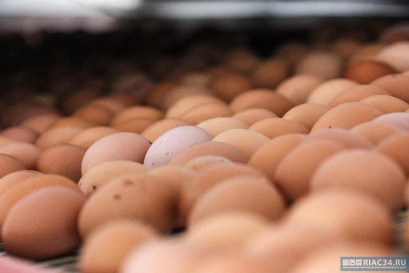 ВВолгоградском «Светофоре» обнаружили 150 килограммов подозрительной колбасы
