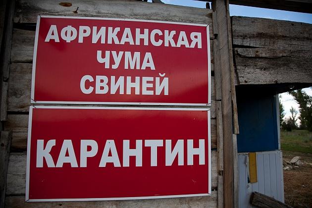 ВСреднеахтубинском районе зарегистрирован случай АЧС