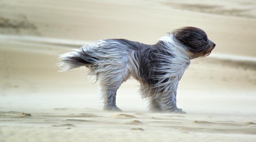 МЧС: вКрыму предполагается резкое похолодание, сильный ветер иград