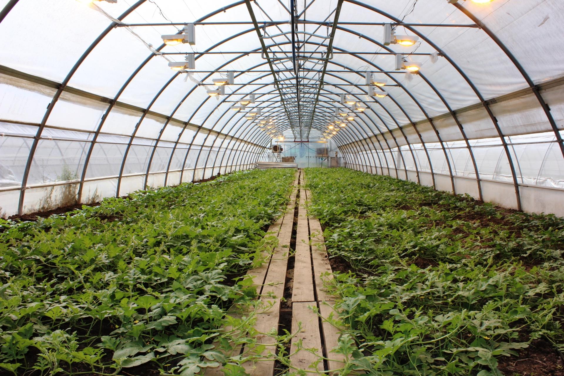 Выcокоурожайное выращивание 37