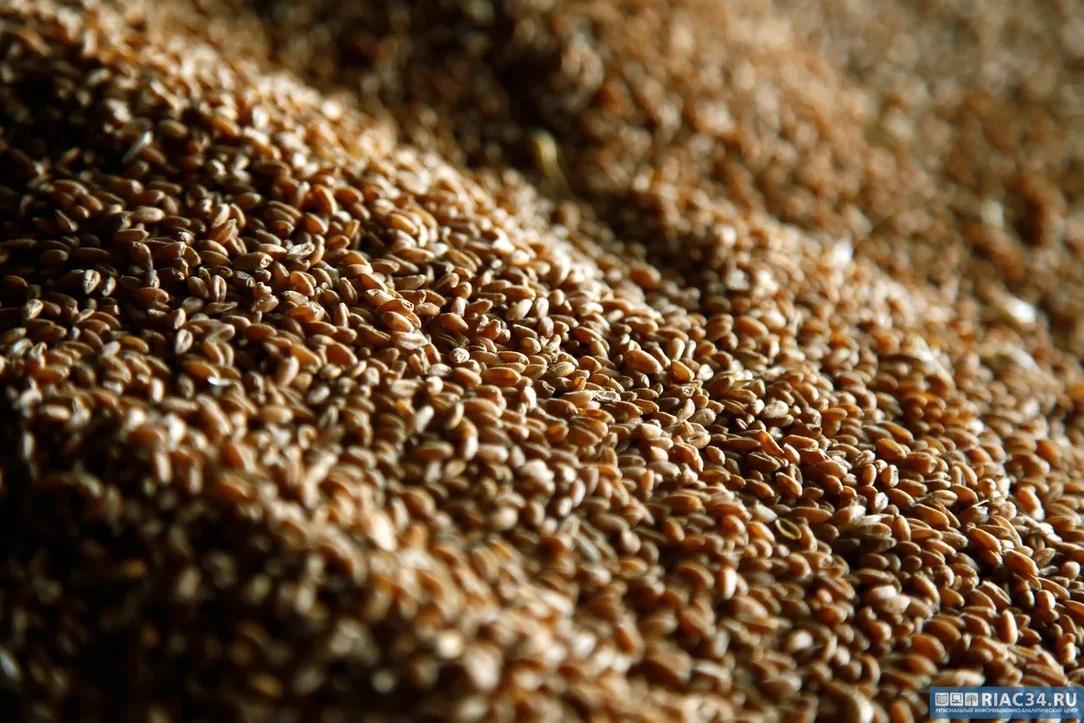 Волгоградские аграрии в три раза увеличили экспорт зерна