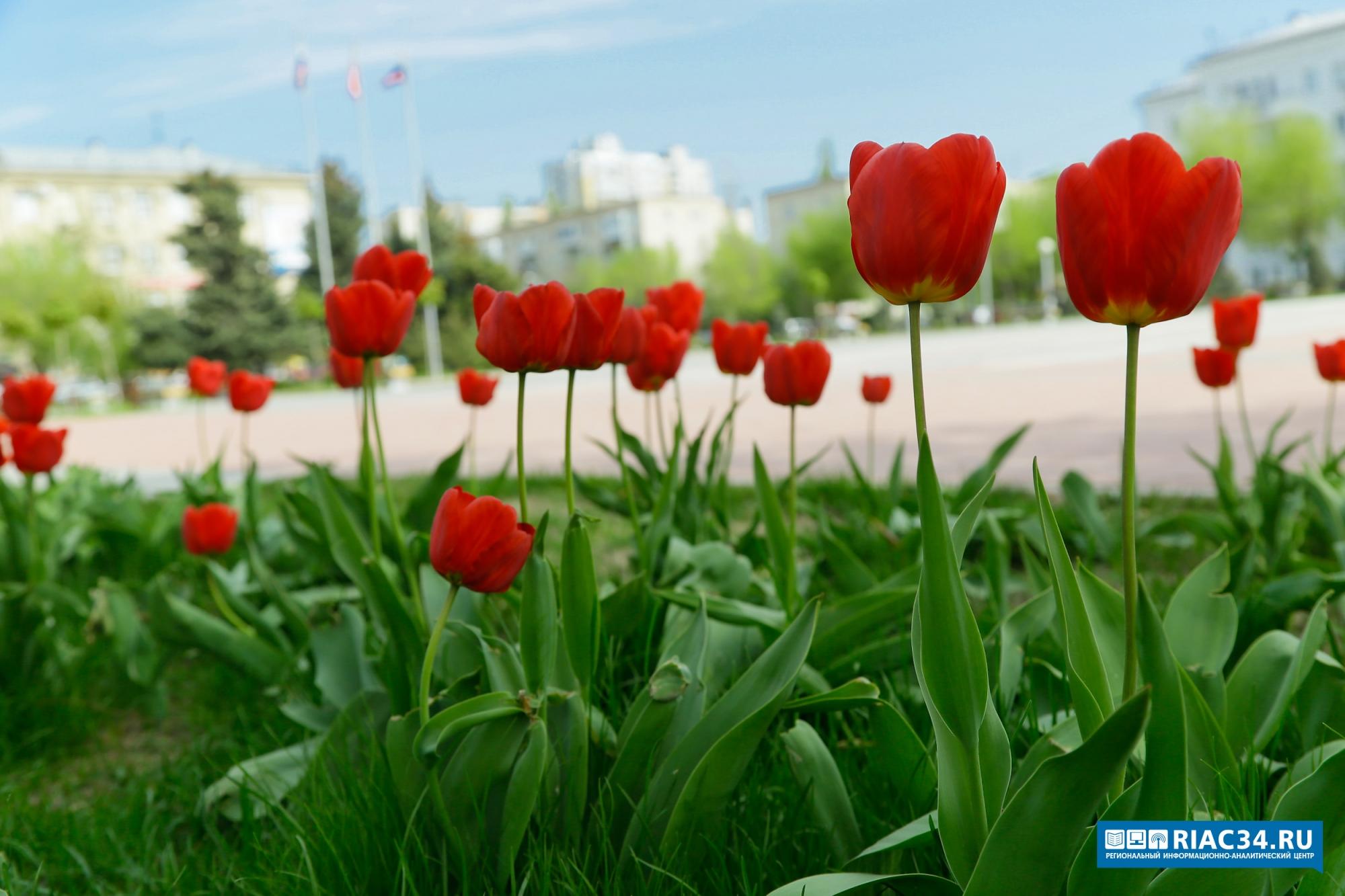Наклумбы Волгограда высадили 30 тыс. цветов