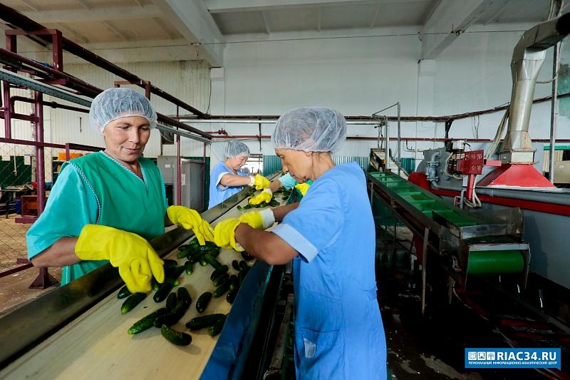 Овощи изКамышинского района будут поставлять напереработку вВолгоград