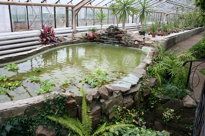 Воранжерее регионального ботанического сада открылась новая экспозиционная площадка